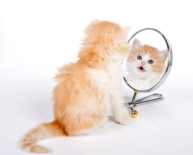 Огледалото – история и приложение